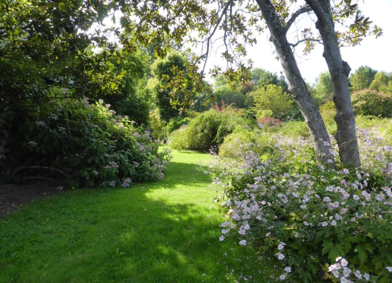 Anémones du Japon et Hydrangeas. Jardins de Berville © AABB